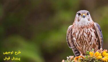 طرح توجیهی پرورش پرندگان شکاری وحشی ( پرورش قوش )