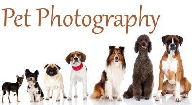 Pet Photography آتلیه عکاسی حیوانات خانگی