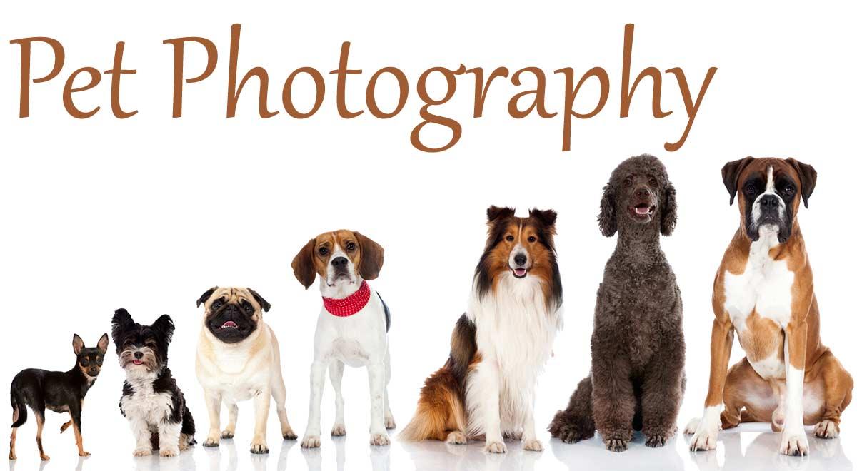 طرح توجیهی آتلیه عکاسی حیوانات خانگی Pet Photography آتلیه عکاسی حیوانات خانگی