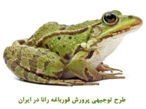 طرح توجیهی پرورش قورباغه رانا - بیزینس پلن تولید قورباغه گوشتی در ایران