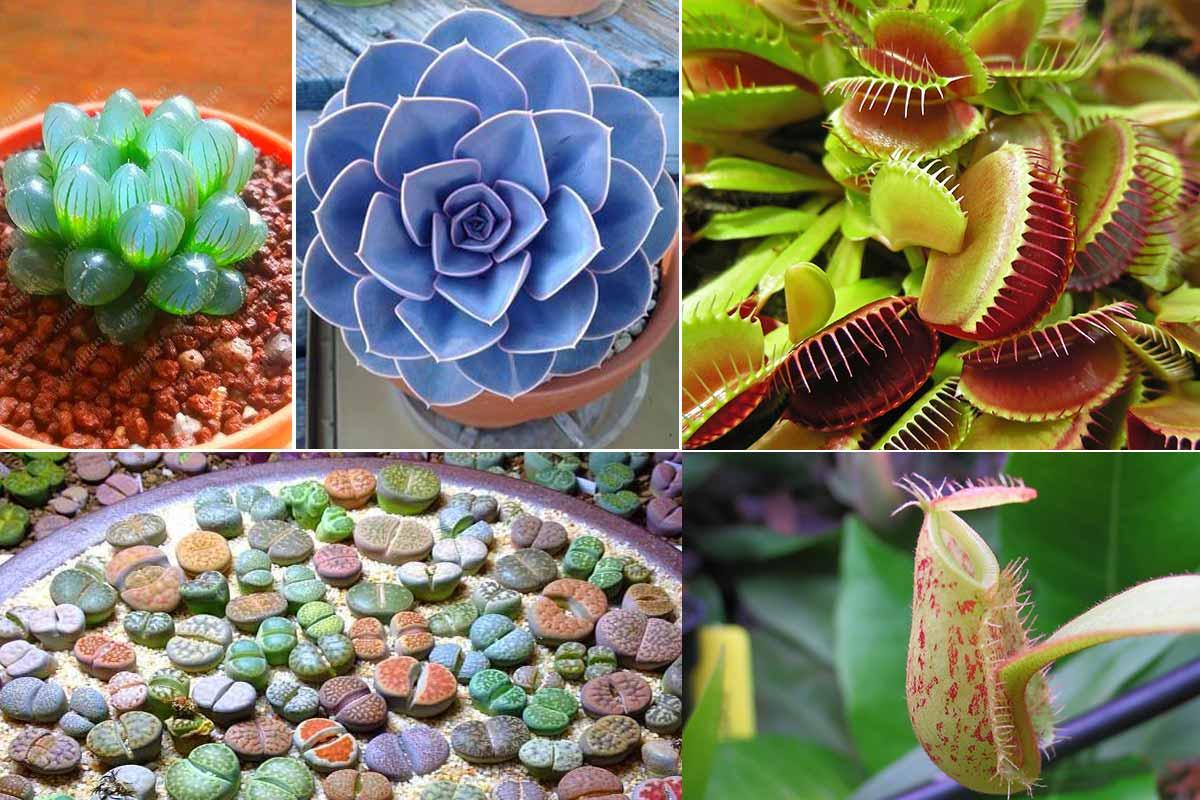 طرح توجیهی تولید و فروش گل و گیاه غیربومی و عجیب
