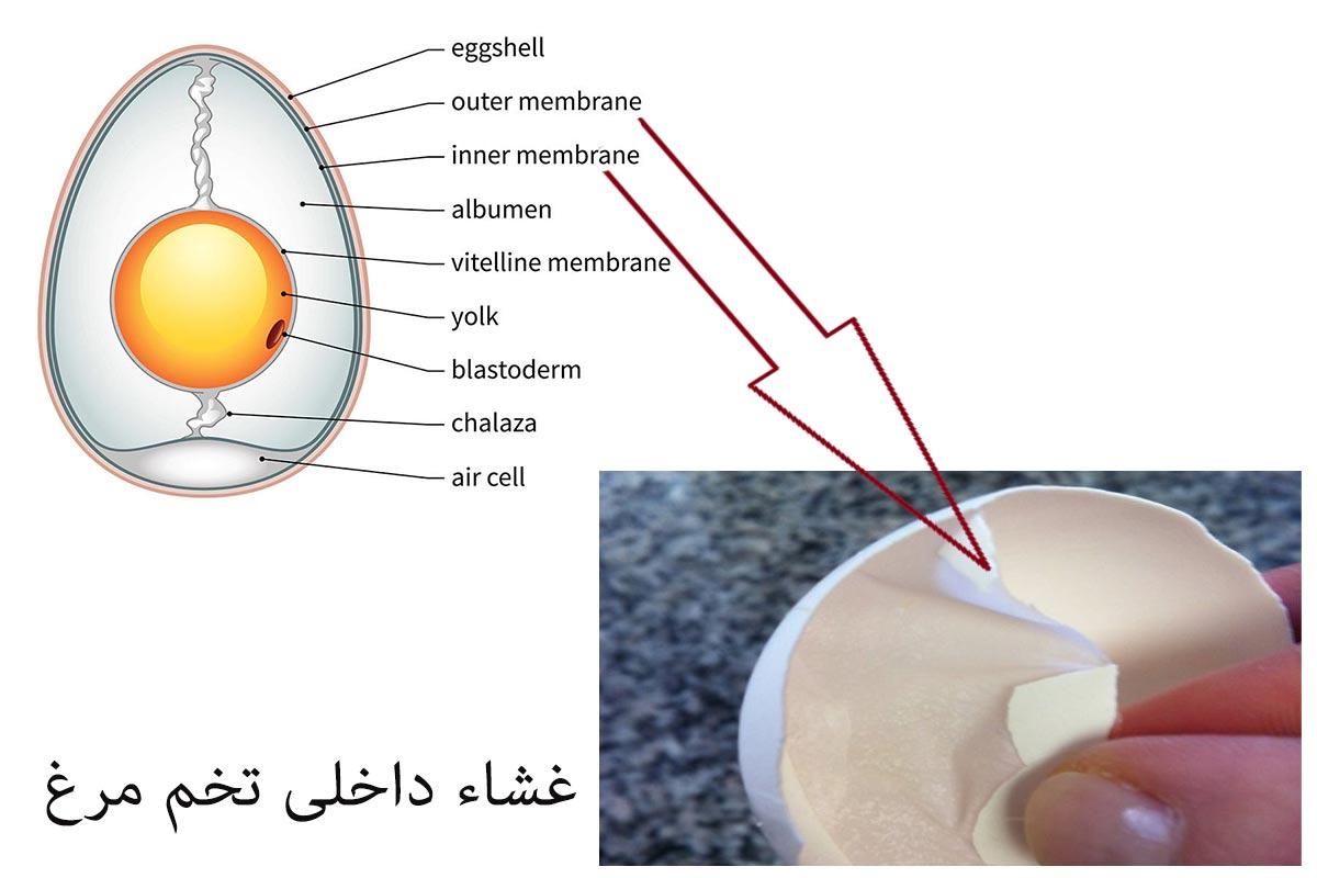 طرح توجیهی بازیافت غشاء پوسته تخم مرغ